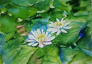 Obrazy - water lilies - 10473343_