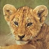 Papier - zvieratká 33 - 10480454_