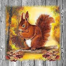 Papier - veverička - 10504433_
