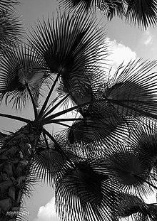 Fotografie - Fotografia - Spleť palmových listov. - 10514203_