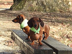 Pre zvieratká - Jarný doplnok pre ušaté parádnice - 10513183_