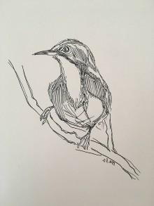 Kresby - Vtáčik čarodej - 10517130_