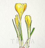 Kresby - Krokus žltý - originál - 10524265_