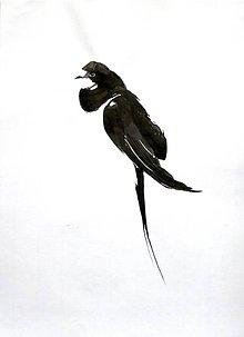 Kresby - Lastovička kresba tušom - 10521703_
