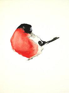 Obrazy - Hýľ obyčajný Pyrrhula maľba akvarel - 10528660_