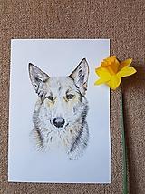 Pes : Kresba na objednávku