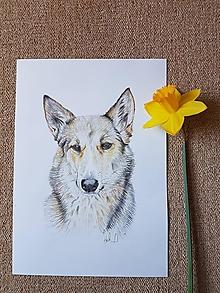 Kresby - Pes : Kresba na objednávku - 10529902_