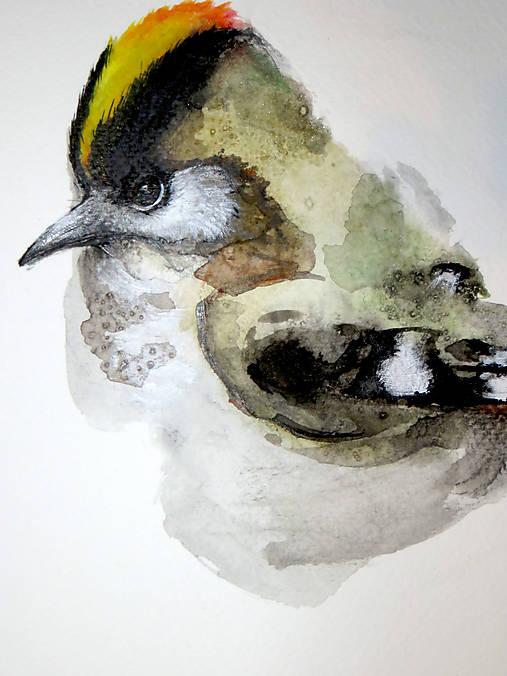 Králik regulus maľba akvarel