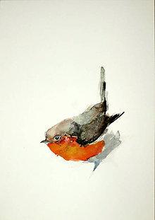 Obrazy - Pinka obyčajná fringilla maľba akvarel - 10536365_