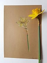 Kresba: Narcis