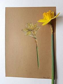Kresby - Kresba: Narcis - 10534766_