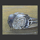 Obrazy - Koupel za soumraku - olejomalba na plátně - 10537537_