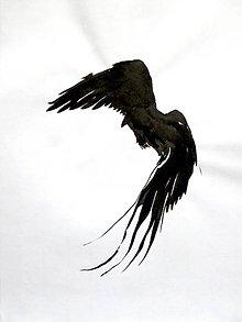 Kresby - Krkavec corvus kresba tušom - 10541175_