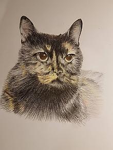 Kresby - Kresba: Mačka - 10540567_