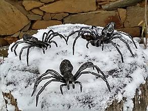 Dekorácie - Pavouk kovaný - 10544474_