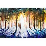 Západ slnka v lese