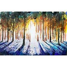 Obrazy - Západ slnka v lese - 10547568_