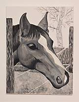 Obrazy - Horse - 10548961_