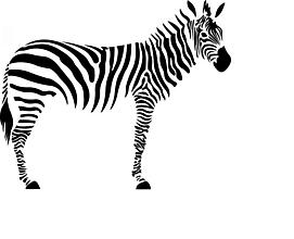 Pomôcky/Nástroje - Šablóna na stenu 74 x 60 cm – zebra - 10555214_