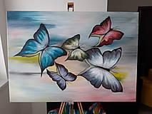 Obrazy - Motýle - 10559604_