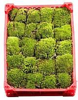 Suroviny - Kopčekovitý mach - ball moss aranžérsky (bledo zelený) - 10563303_