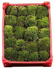 Suroviny - Kopčekovitý mach - ball moss aranžérsky (tmavo zelený) - 10563304_