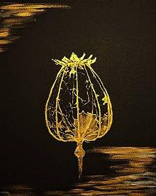 Obrazy - Skeletal poppy head - 10574185_