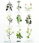 Papier - Ryžový papier na decoupage -A4-R402- herbs, bylinky - 10573157_