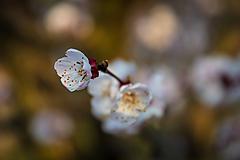 Fotografie - Jarný pozdrav 3 - 10581833_