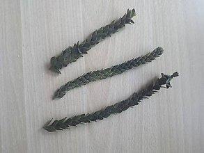 Suroviny - Buxifolia 10 g - 10589828_