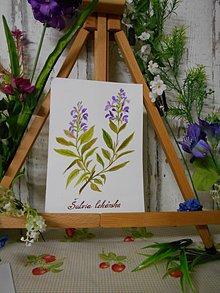 Obrazy - Šalvia lekárska - maľovaný akvarel - 10594680_