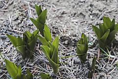 Fotografie - Prvá jarná zeleň - 10593935_