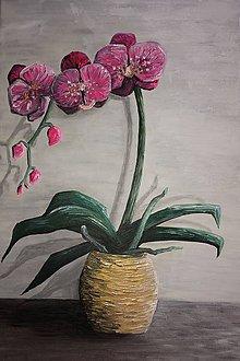 Obrazy - Orchidea - 10595150_
