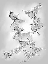Kresby - Štúdia vtáčat (plagát) - 10596133_