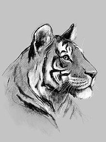 Kresby - Tiger (plagát) - 10596372_