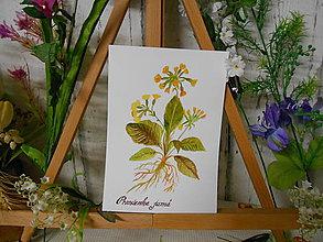 Obrazy - Prvosienka jarná - maľovaný akvarel - 10600999_