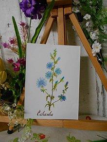 Obrazy - Čakanka - maľovaný akarel - 10601049_