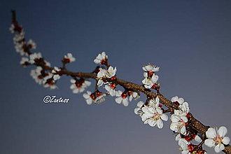 Fotografie - Fotografia... Zakvitnutá - 10606603_