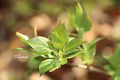 Fotografie - Fotografia... Zelený nádych - 10608041_