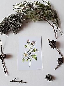 Papiernictvo - Pohľad:nica:: ruža biela - 10607351_