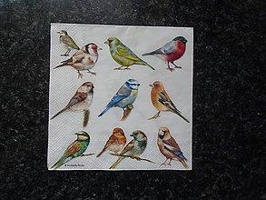 Papier - vtáčiky 2 - 10612324_