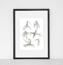 """Kresby - Obrázok """"snežienky"""", print A4 - 10620306_"""