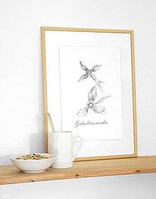 """Kresby - Obrázok """"2 snežienky"""" print A4 - 10620334_"""
