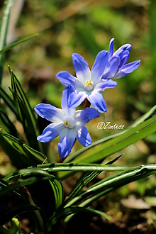 Fotografie - V-Fotografia... Svieža kráska - 10625595_