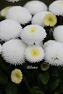 Fotografie - V-Fotografia... Jar v bielych sukničkách - 10635742_