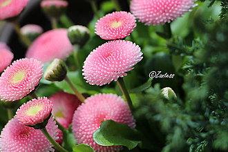 Fotografie - Fotografia... Ružové sukničky - 10640347_