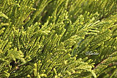Fotografie - Fotografia... V zelenom ošiali - 10644393_