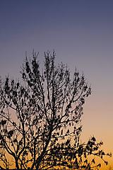 Fotografie - Strom - 10654103_