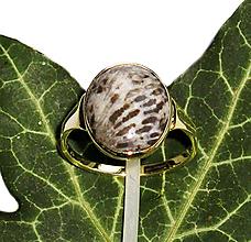 Prstene - ZLATÝ prsten fosilní BRYOZAN 15*12 - 10656114_