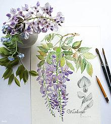 Obrazy - Wistéria, akvarel + ceruzka, tlač A4 - 10678061_